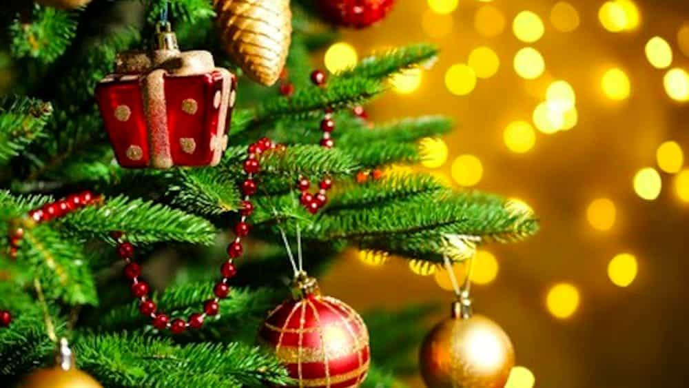 Albero Natale.Dove Comprare Un Albero Di Natale A Bologna