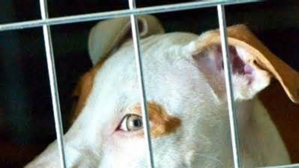 pagine di trovare un paio di cani rome escort agency